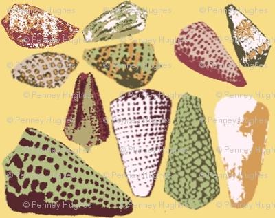 Barrier Reef Shells 1