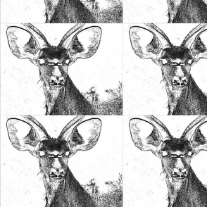Kudu Face Original