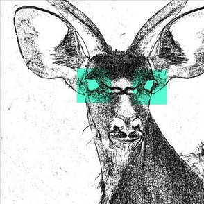 Greater Kudu of Glowing Eyes