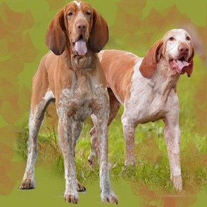 bracco Italiano dogs fabric