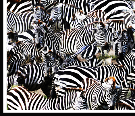 Zebra on migration fabric by pondprinter on Spoonflower - custom fabric
