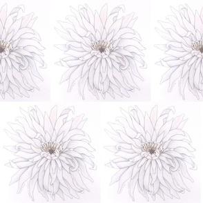 vanilla_daisy