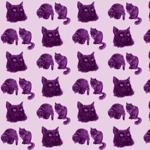 Trinity Lilac - My Black Cat