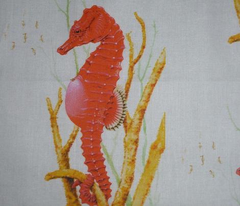 seahorse2white