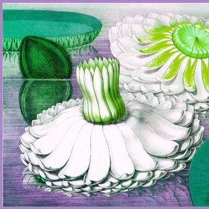 Water Lilies B