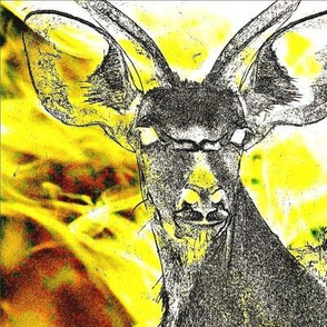 Kudu in Yellow Lights