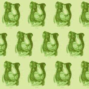 William the Guinea Pig Green