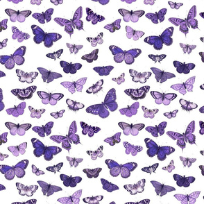 Flutter, Butterflies Purple RePrint