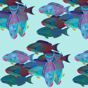 Parrotfish seule, on pale aqua by Su_G