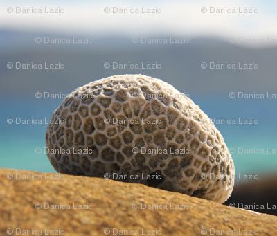 Great Barrier Reef stone hooks