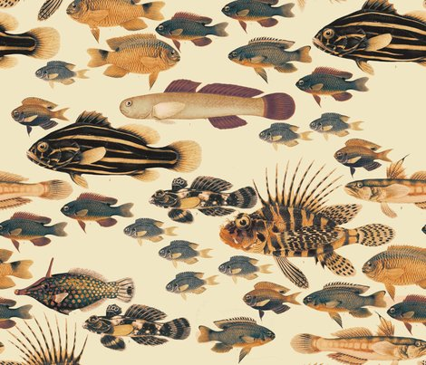 Rrfishes-of-samoa-limited_shop_preview