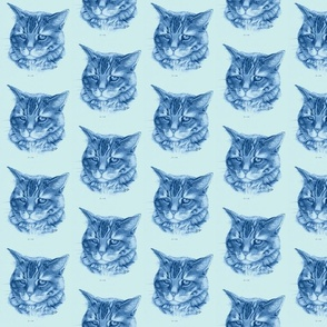 Oliver Blue - the Cat