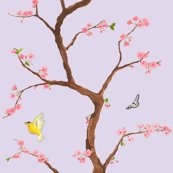 Jenny_cherry_blossoms_in_lavender_shop_thumb