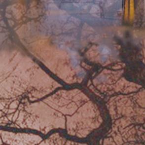 austria-trees-light-2