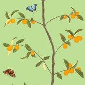 Rjenny_kumquat_in_spring_green_shop_thumb