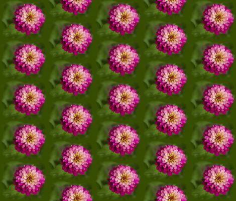 Pink Zinnia fabric by nicolemehelich on Spoonflower - custom fabric