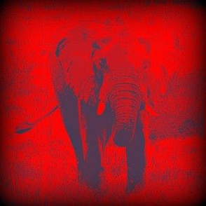 Positive Elephant in Negative Light