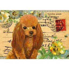 Apricot poodle antique postcard