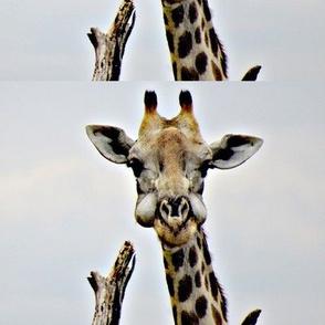 Irrational Giraffe Chewing