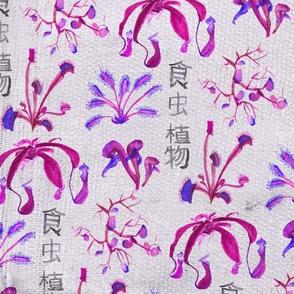 Carnivorous plants pink