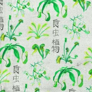 Carnivorous plants greens