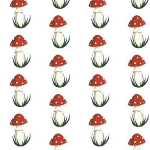 Amanita Muscaria on White