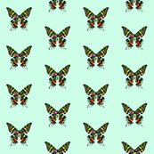 Rbutterfly_color_shop_thumb