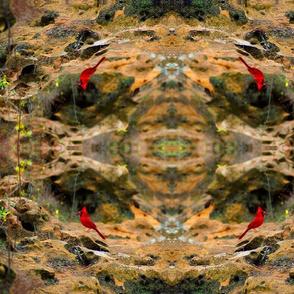 Cardinals Rock