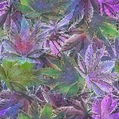 Rrpurpleindicaleaves_4spf_shop_thumb