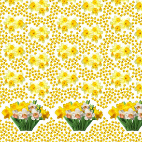 Janet_s_daffodil_border_toss_h_