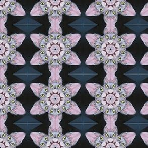 Mocha Sphynx  Abstract Star Flower