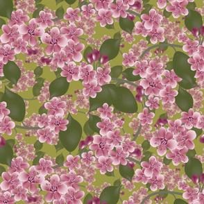 blossom on green