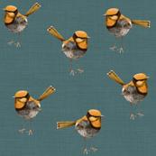 Golden Wrens on Slate