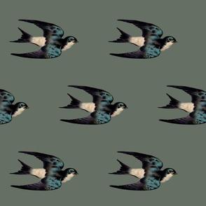 bluegraybird