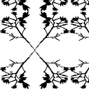Crepe Myrtle 3 Serpentine