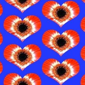 The Heart of the Daisy