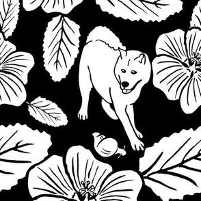 `Ilima Blossoms
