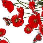 Poppies at 90