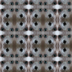 Sphynx Cat Mr. Krout Abstracted