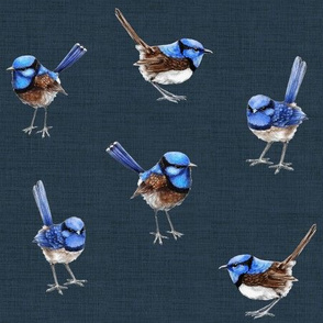 Blue Wrens on Dark Denim