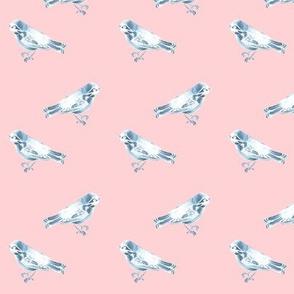Songbird, Soft Blue on Pink