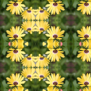 Yellow Daisy Floral