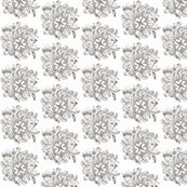 Rline_drawing_swirl_flower_pattern_vector_graphic_shop_thumb