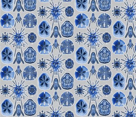 haeckel3invert fabric by craftyscientists on Spoonflower - custom fabric