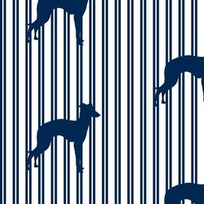 Italian Greyhound Navy Pinstripe