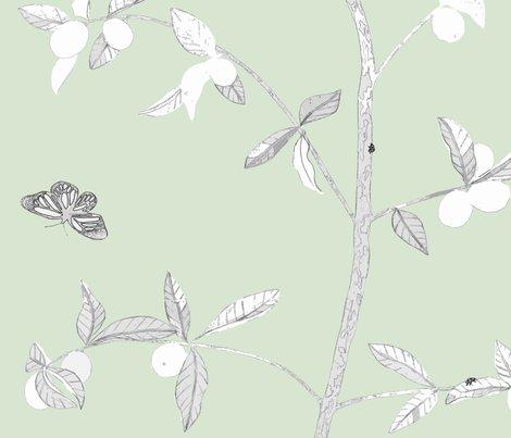 Jenny_modern_kumquat_on_soft_green_shop_preview