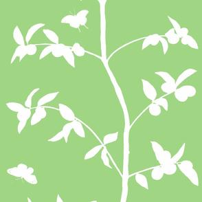 Jenny Simple kumquat on leaf