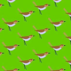 Bird get the worm