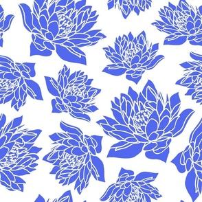 WATERLILLY CORNFLOWER  BLUE