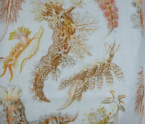 nudibranch white